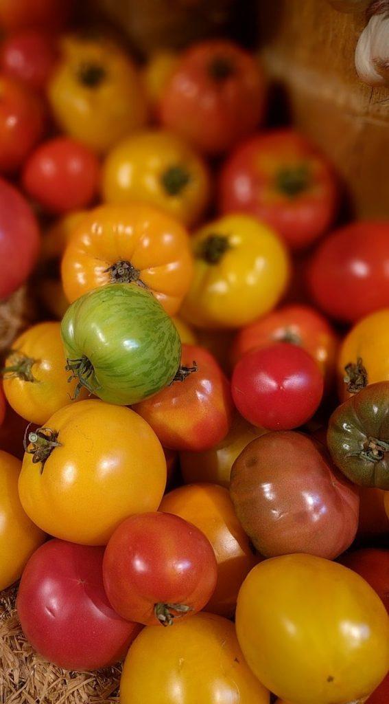 Помидоры- разные сорта хранятся по разному