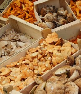 грибы разных видов замораживаются отдельно