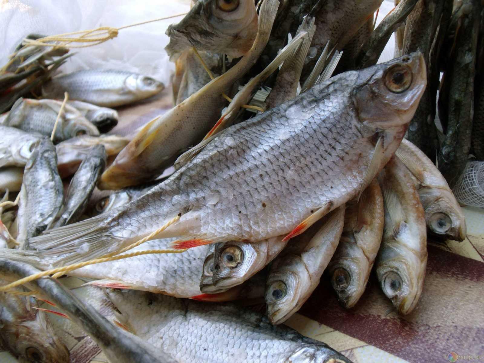 Как хранить вяленую (сушеную) рыбу