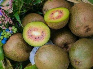 киви полезный и вкусный фрукт