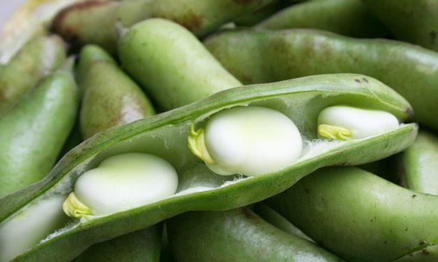 Как хранить фасоль
